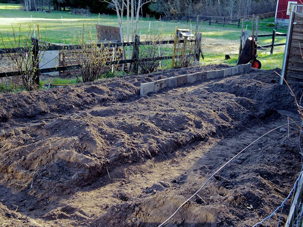 Trädgårdslandet nästan redo för årets sådd