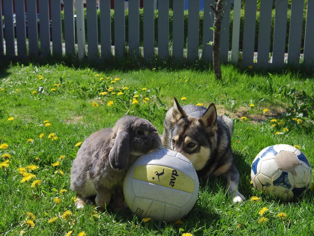 Hund och kanin