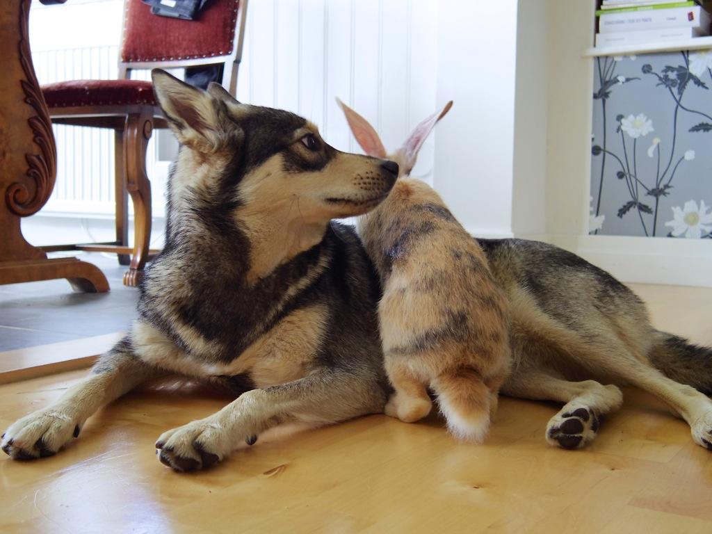Asta och Fridolf