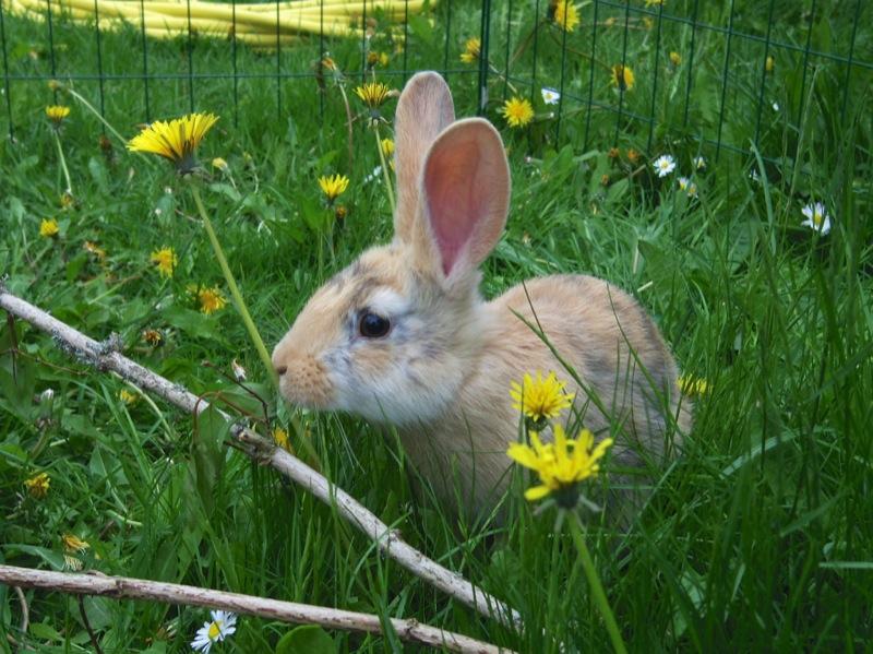 Kaninen Fridolf