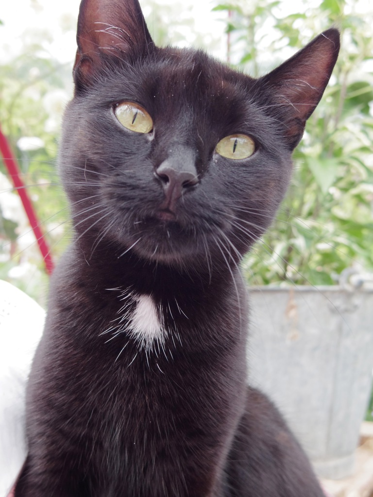Katten Birgitta