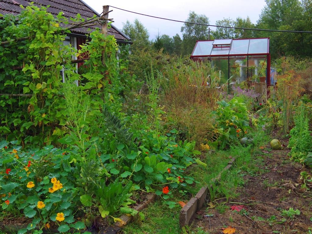 Trädgårdslandet, mitten på september