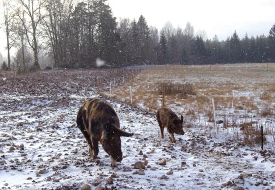 Utegrisar, Torhild och Arthur