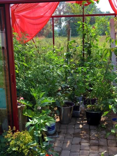Överfyllt växthus