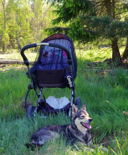 En hund och hennes vagn