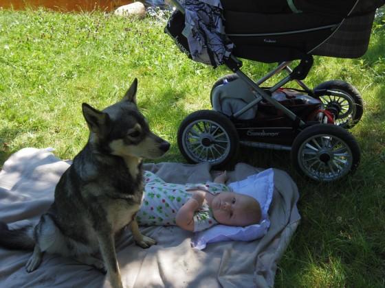 Hund och bebis